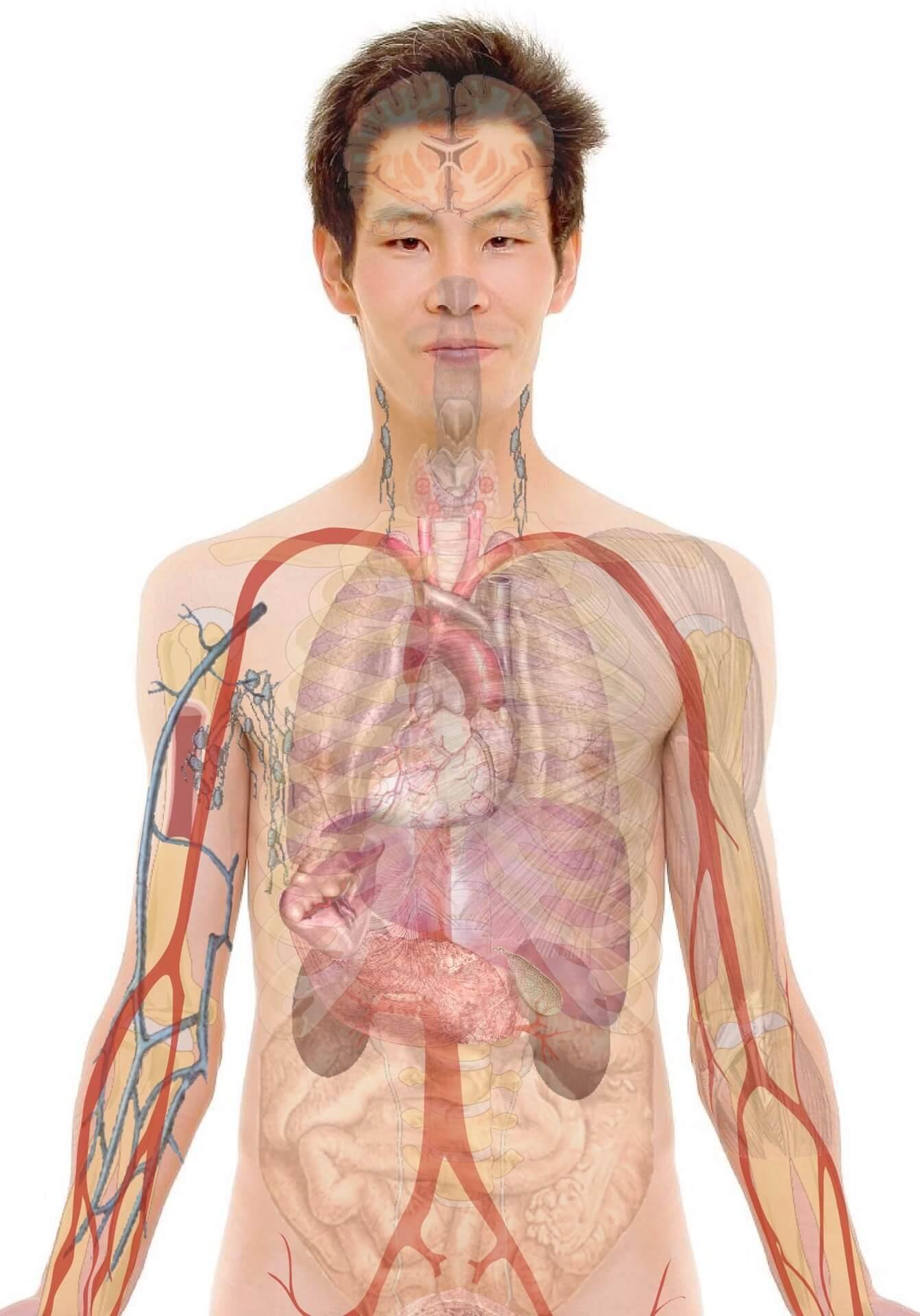 anatomia-enfermeria-militar
